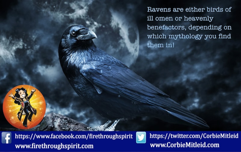 Ravens As Omens & Spirit Guides: Black Raven On A Dark Night